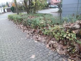 Hof/oeffentliche-Flaechen/Gehweg-Burenkamp